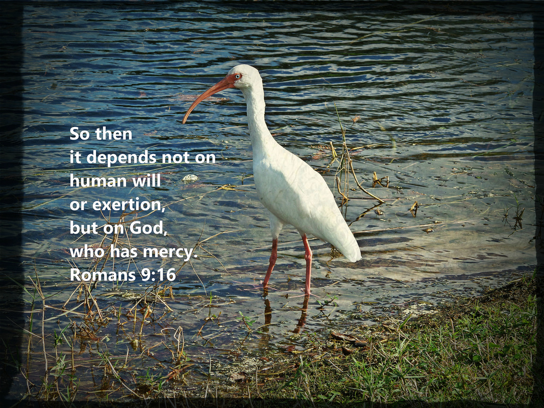 So then it depends not on human will or exertion, but on God, who has mercy. Romans 9:16