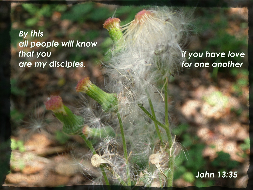 By this all people will know that you are my disciples, if you have love for one another. John 13:35