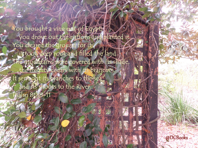 Psalm 80:8-11 on Photo of Vines on Trellis by Donna Campbell