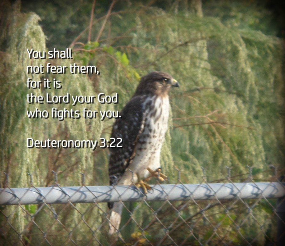 You shall not fear them, for it is the Lord your God who fights for you. Deuteronomy 3:22