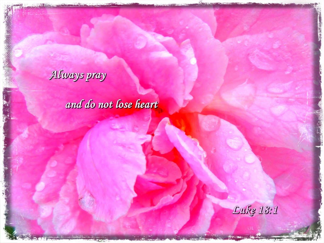 Always pray and do not lose heart Luke 18:1 on photo of Pink Rose after a Storm