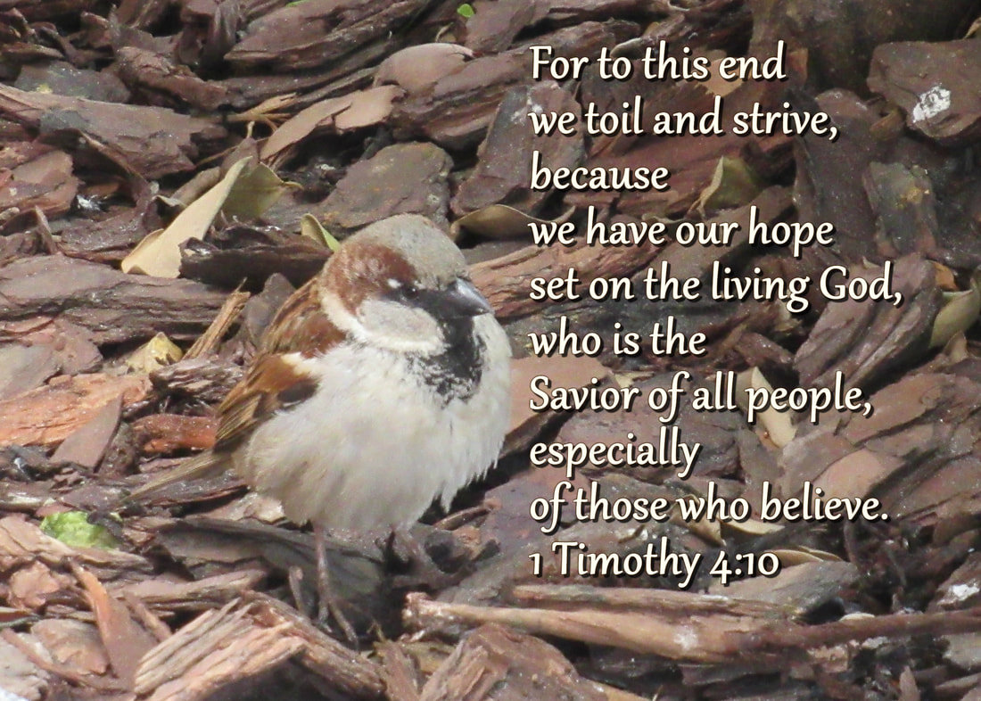 For to this end we toil and strive, because we have our hope set on the living God, who is the Savior of all people, especially of those who believe.  1 Timothy 4:10