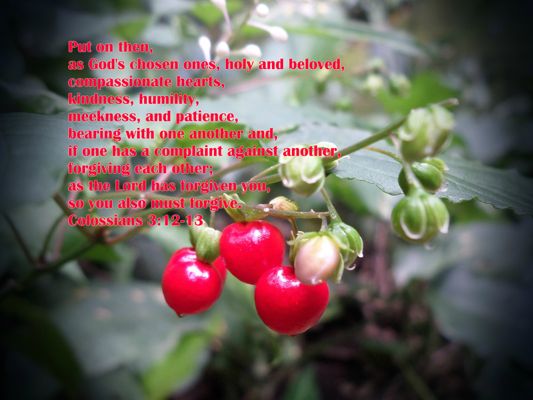Put on then, as God's chosen ones, holy and beloved, compassionate hearts, kindness, humility, meekness, and patience,  bearing with one another and, if one has a complaint against another, forgiving each other; as the Lord has forgiven you, so you also must forgive. Colossians 3:12-13 on photo of Red Berries by Donna Campbell
