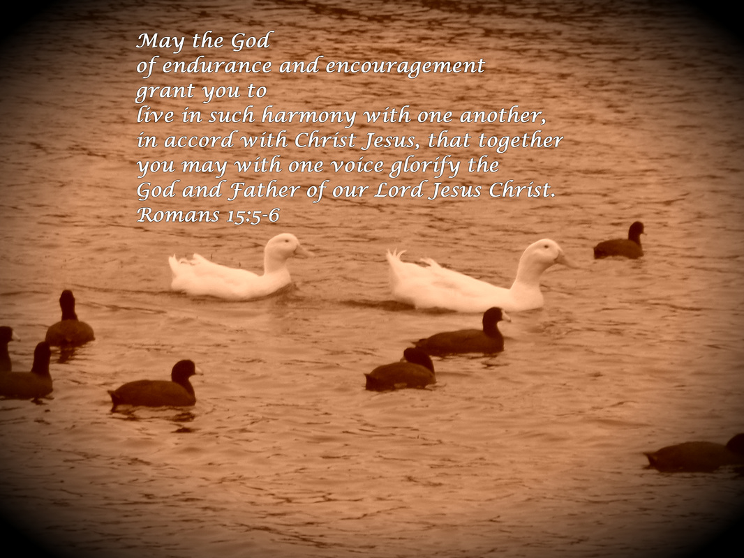 Romans 15:5-6 on Photo of Ducks and Coots by Donna Campbell