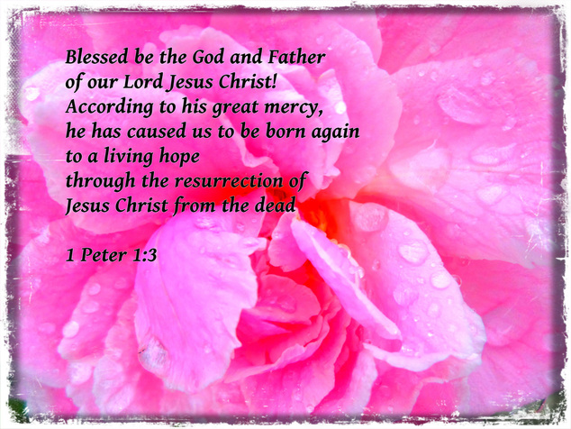 Blessed be the God and Father of our Lord Jesus Christ! According to his great mercy, he has caused us to be born again to a living hope through the resurrection of Jesus Christ from the dead 1 Peter 1:3