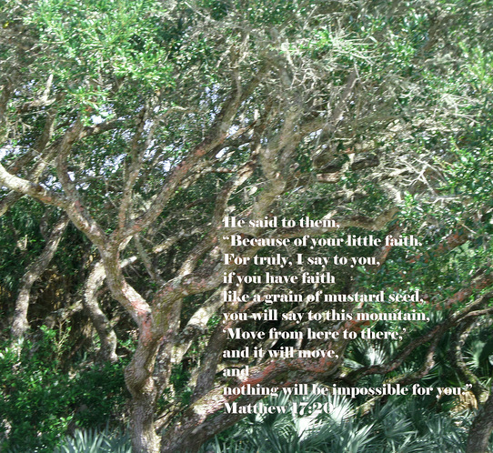 "He said to them, ""Because of your little faith. For truly, I say to you, if you have faith like a grain of mustard seed, you will say to this mountain, 'Move from here to there,' and it will move, and nothing will be impossible for you."" Matthew 17:20   On photo of Beautiful Tree by Donna Campbell"