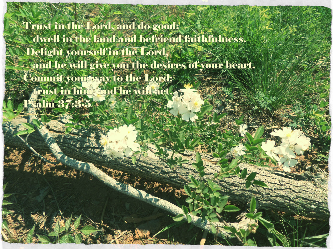 Trust in the Lord, and do good;     dwell in the land and befriend faithfulness.  Delight yourself in the Lord,     and he will give you the desires of your heart. Commit your way to the Lord;     trust in him, and he will act. Psalm 37:3-5 On photo of White Flowers on Log by Donna Campbell