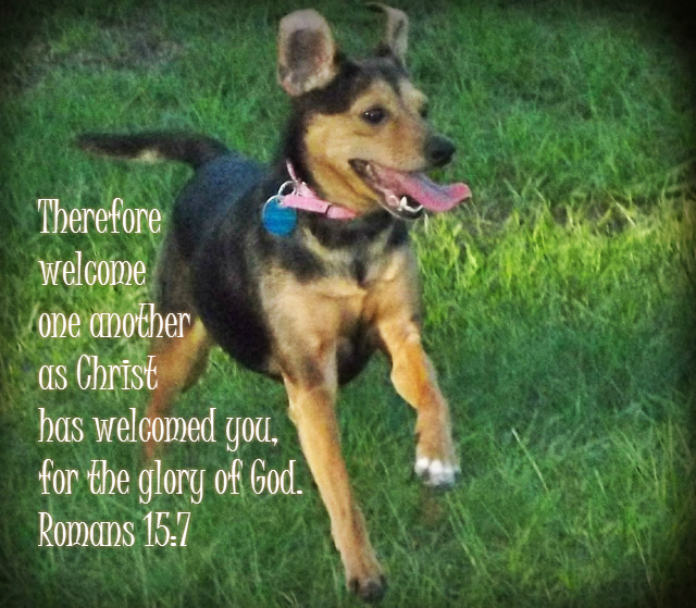 Therefore welcome one another as Christ has welcomed you, for the glory of God. Romans 15:7 on Photo of Sookie by Lani Campbell