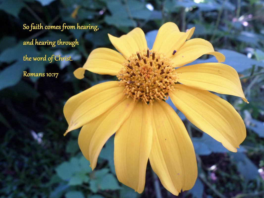 So faith comes from hearing, and hearing through the word of Christ. Romans 10:17 On Photo of Yellow Flower in Costa Rica by Donna Campbell