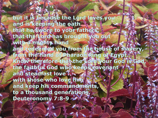 Deuteronomy 7:8-9 on photo of plants by Donna Campbell
