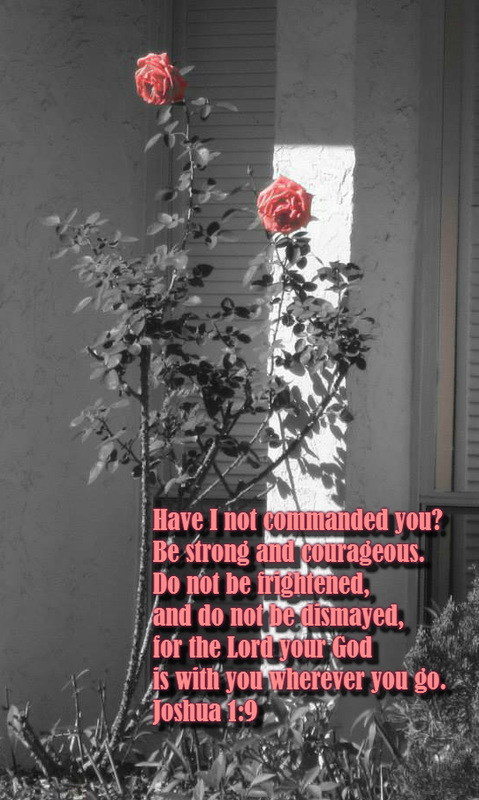 Have I not commanded you? Be strong and courageous. Do not be frightened, and do not be dismayed, for the Lord your God is with you wherever you go. Joshua 1:9 On photo of Roses in Pink by Lani Campbell