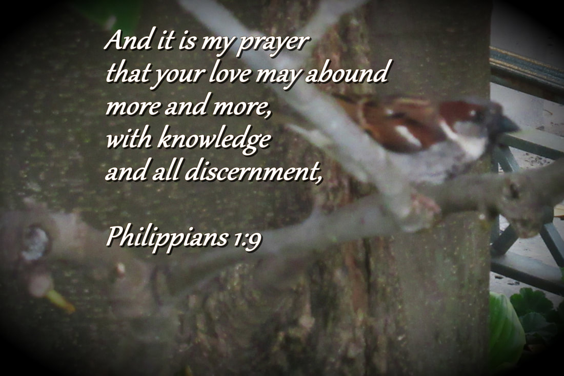 And it is my prayer that your love may abound more and more, with knowledge and all discernment, Philippians 1:9 The practice of Examen devotional