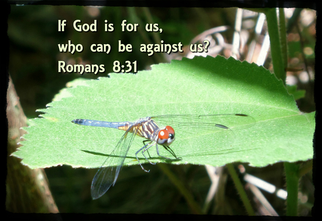 What then shall we say to these things? If God is for us, who can be against us? Romans 8:31 On photo of Dragonfly in the Sun